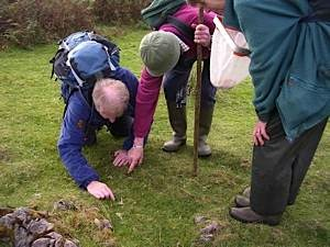 Scottish-Wildlife-Trust-Skye-members-examining-waxcap-mushrooms