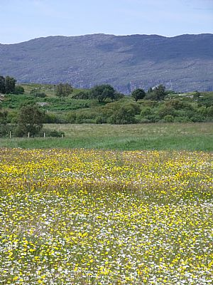 Species rich meadow at Duirinish