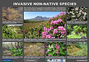 Invasive Non-Native Species
