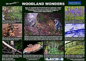 James Merryweathers Choice: Woodland Wonders